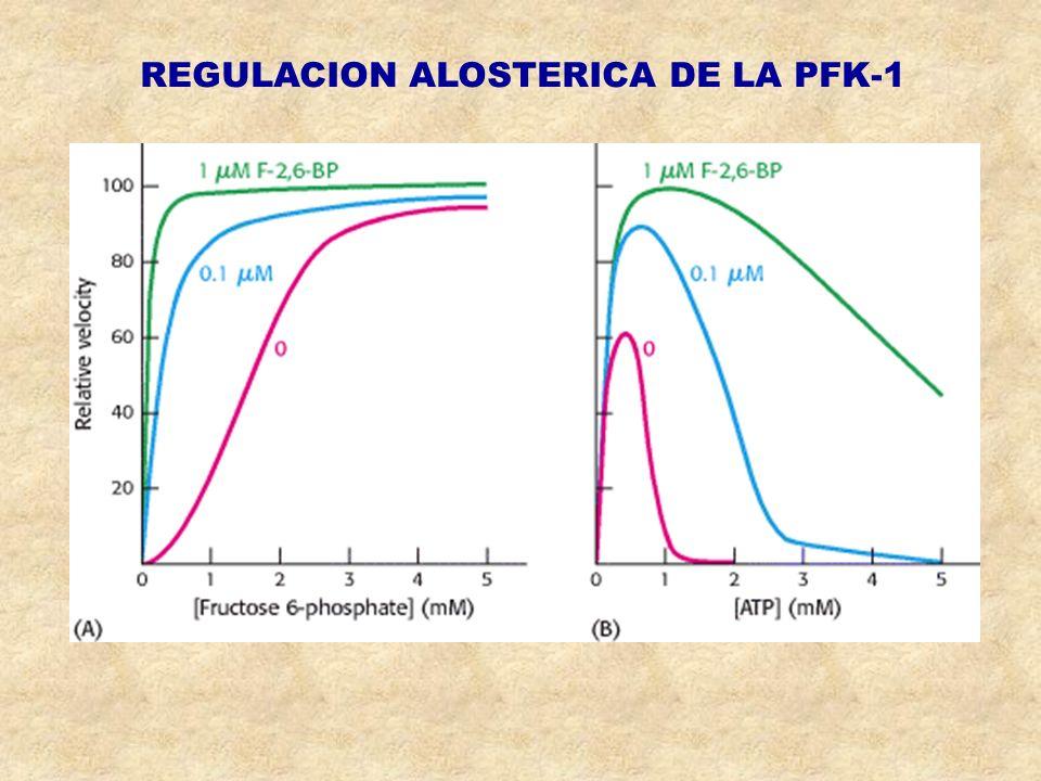 REGULACION ALOSTERICA DE LA PFK-1