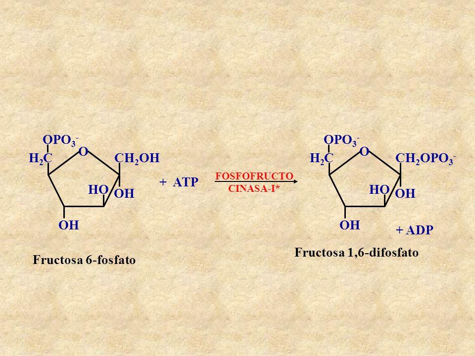O CH2OH OH HO C H2 OPO3- + ATP CH2OPO3- + ADP Fructosa 1,6-difosfato