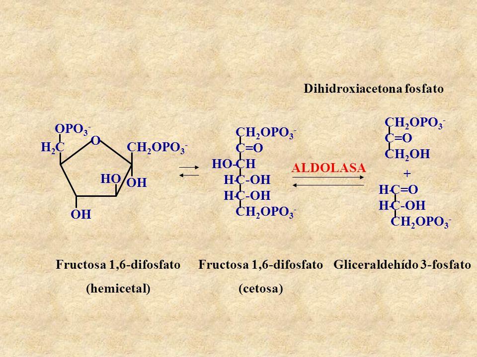 Dihidroxiacetona fosfato