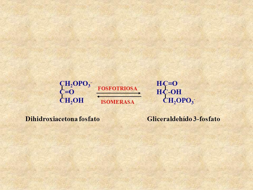 Dihidroxiacetona fosfato Gliceraldehído 3-fosfato
