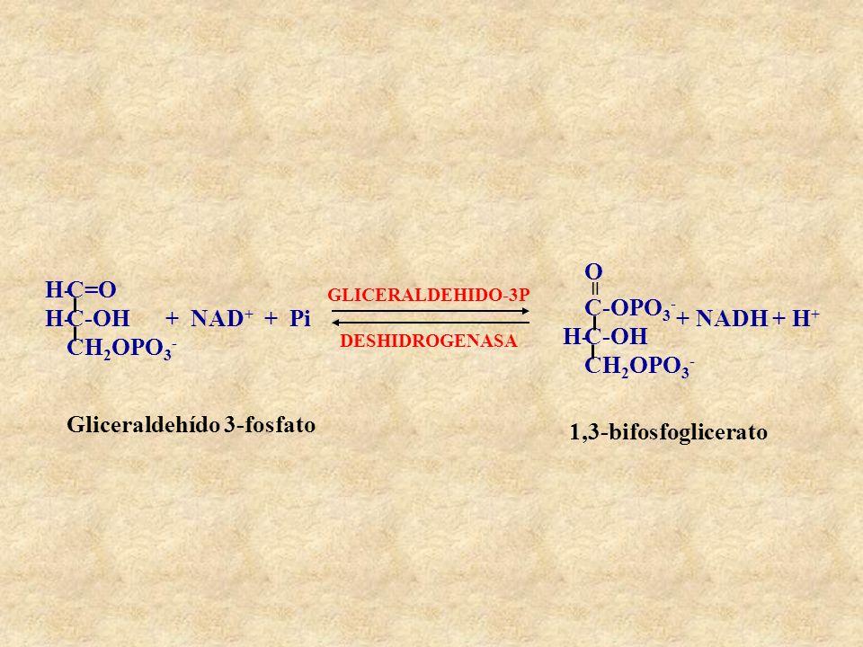 Gliceraldehído 3-fosfato 1,3-bifosfoglicerato