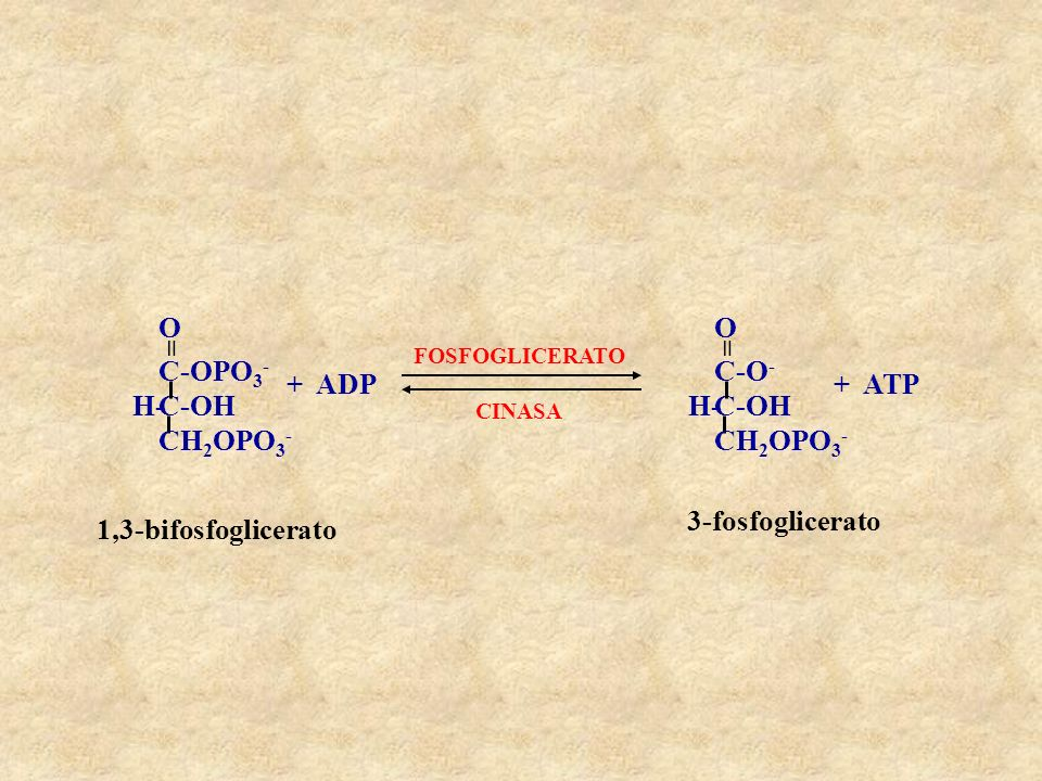 C-OH CH2OPO3- C-OPO3- H- = O + ADP C-O- + ATP 3-fosfoglicerato