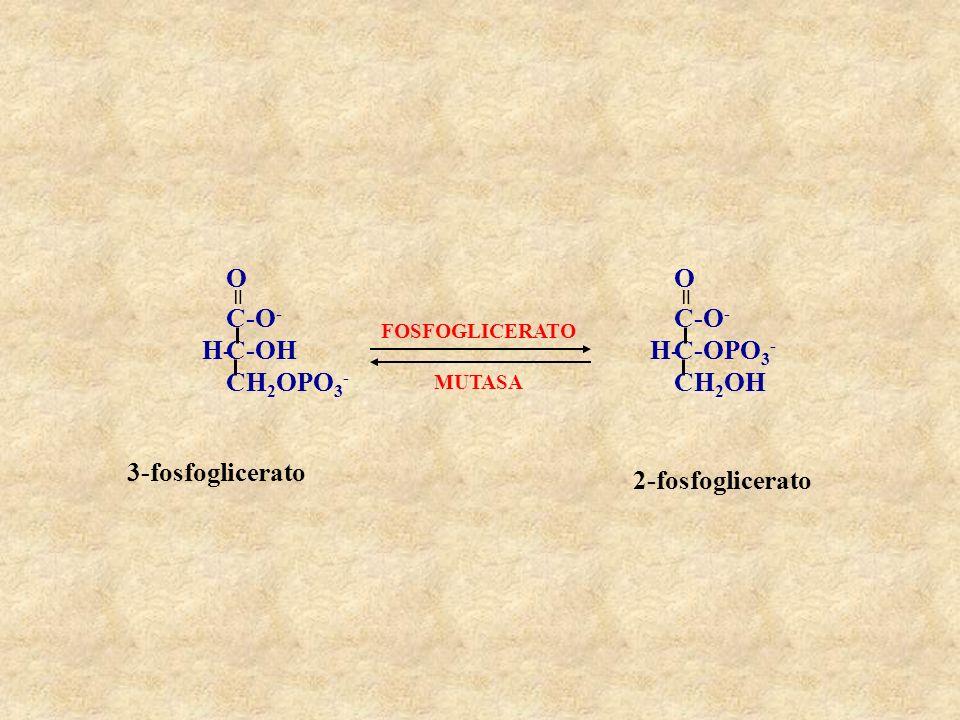 C-OH CH2OPO3- C-O- H- = O C-OPO3- CH2OH 3-fosfoglicerato