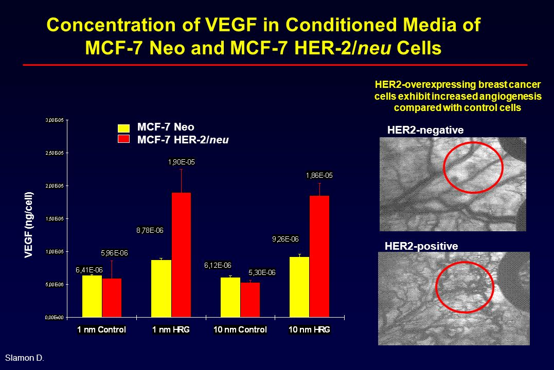 Concentration of VEGF in Conditioned Media of MCF-7 Neo and MCF-7 HER-2/neu Cells