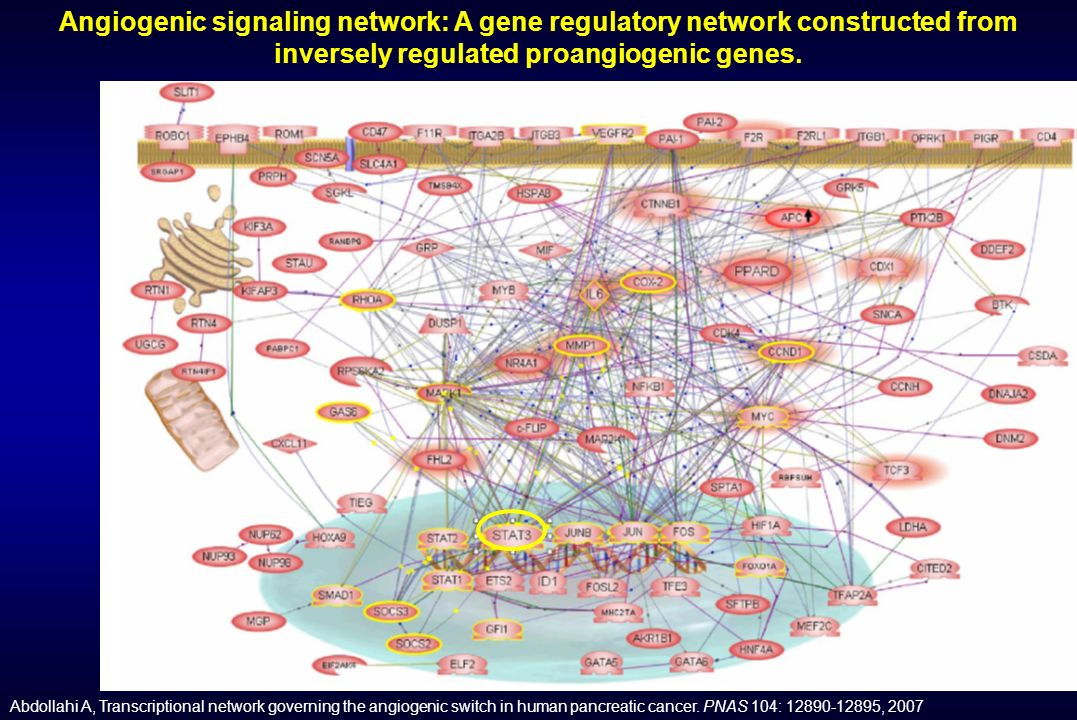 Angiogenic signaling network: A gene regulatory network constructed from inversely regulated proangiogenic genes.