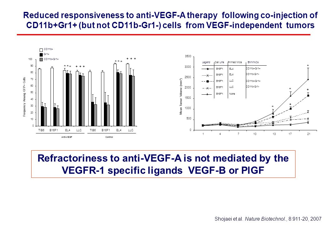Reduced responsiveness to anti-VEGF-A therapy following co-injection of CD11b+Gr1+ (but not CD11b-Gr1-) cells from VEGF-independent tumors