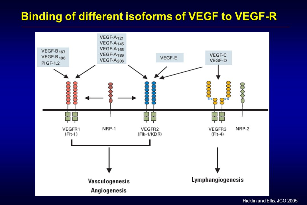 Binding of different isoforms of VEGF to VEGF-R