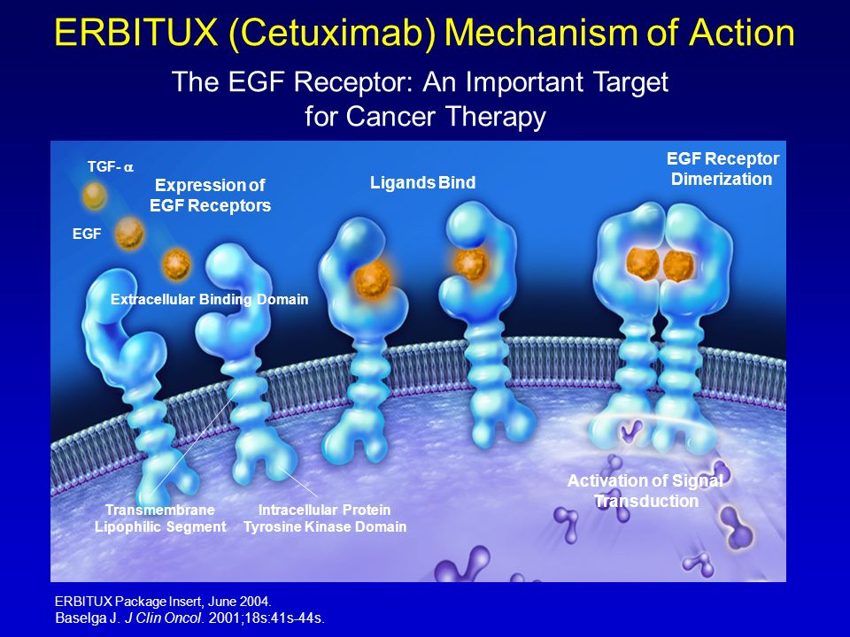 ERBITUX (Cetuximab) Mechanism of Action