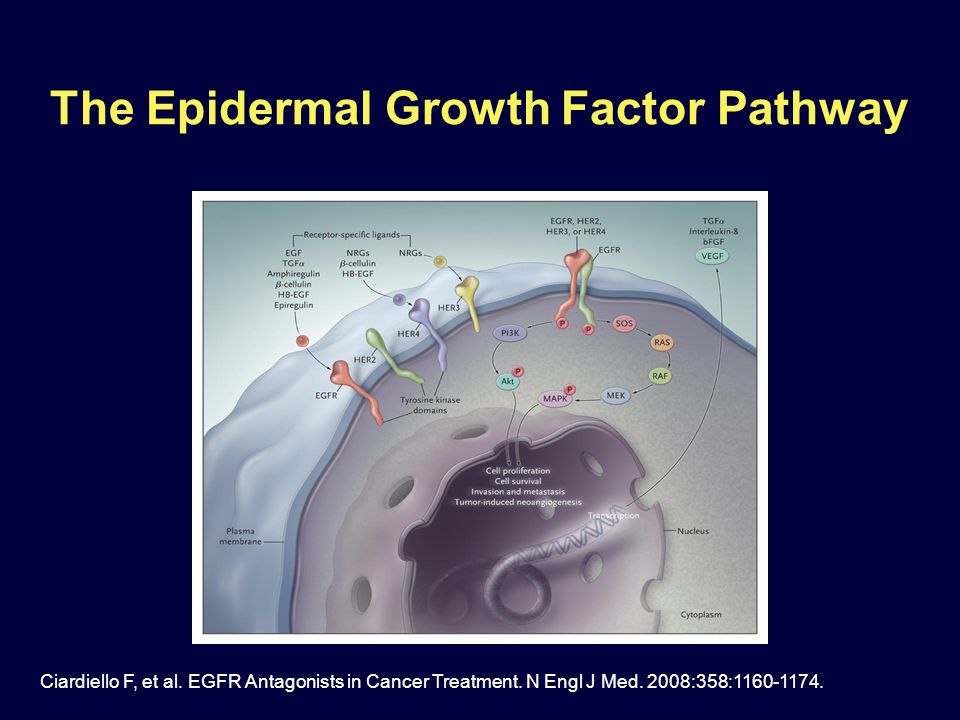 The Epidermal Growth Factor Pathway