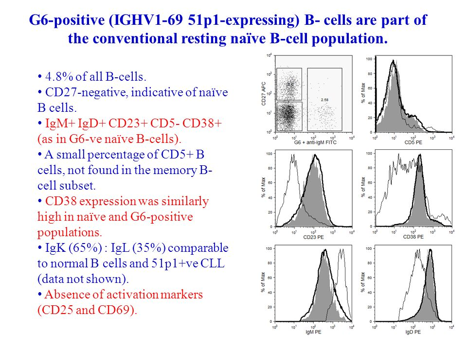 G6-positive (IGHV1-69 51p1-expressing) B- cells are part of the conventional resting naïve B-cell population.