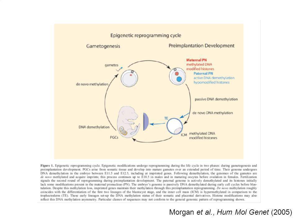 Morgan et al., Hum Mol Genet (2005)