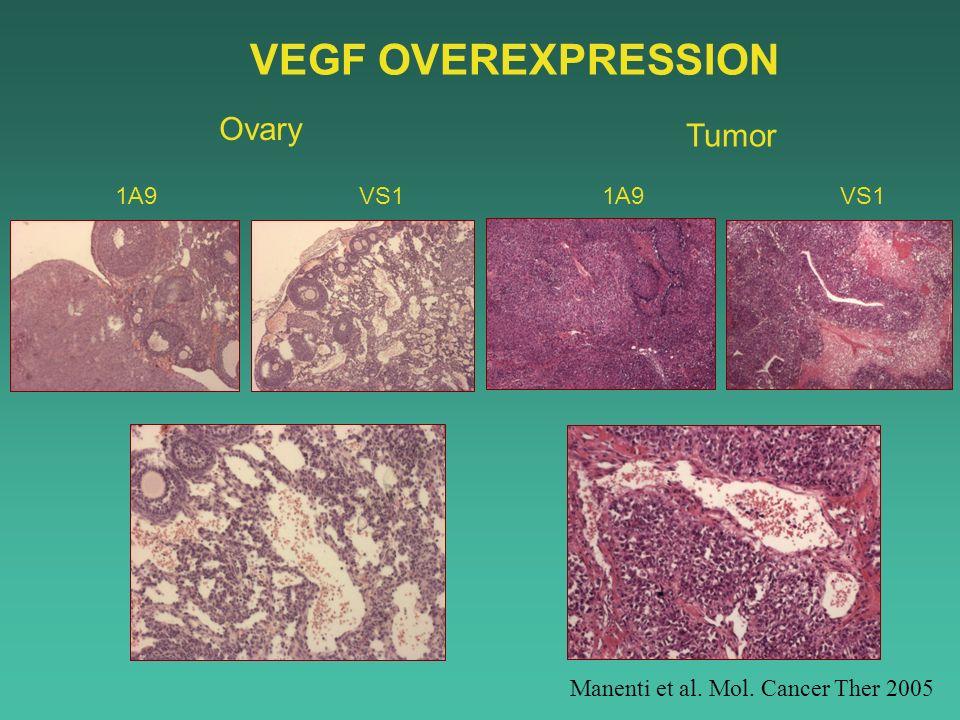 VEGF OVEREXPRESSION Ovary Tumor 1A9 VS1 1A9 VS1