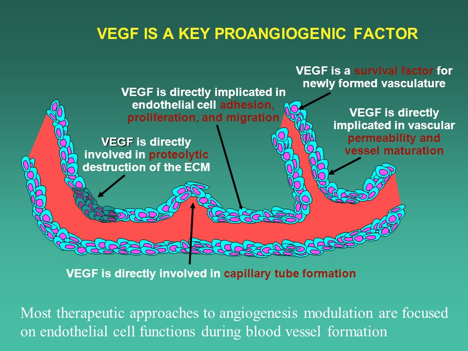 VEGF IS A KEY PROANGIOGENIC FACTOR