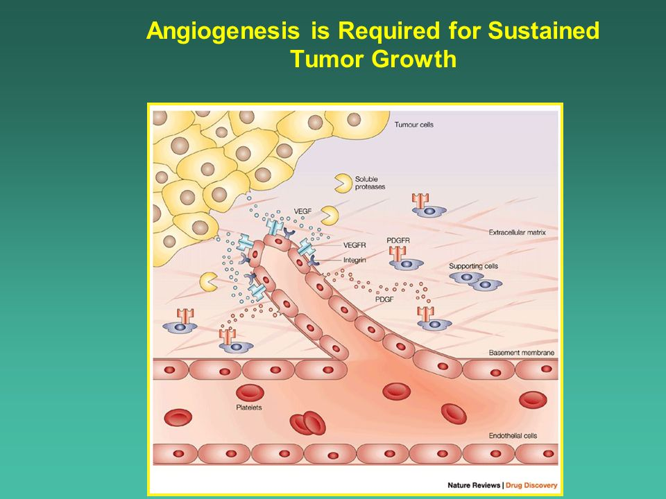 Angiogenesis is Required for Sustained Tumor Growth
