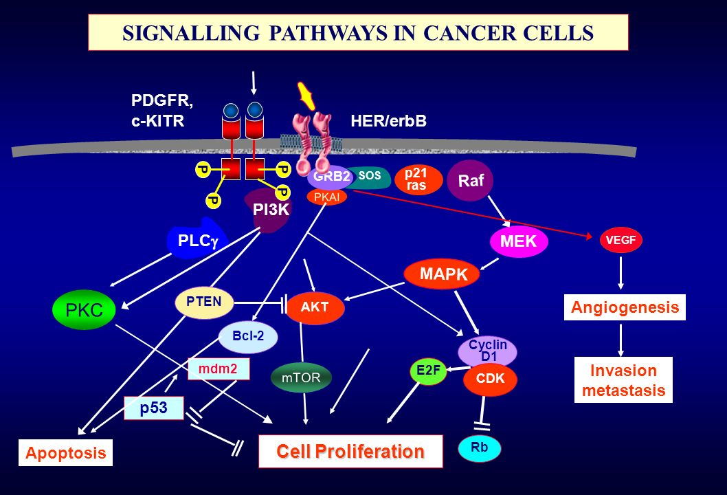 SIGNALLING PATHWAYS IN CANCER CELLS