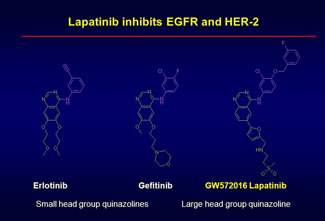 Lapatinib inhibits EGFR and HER-2