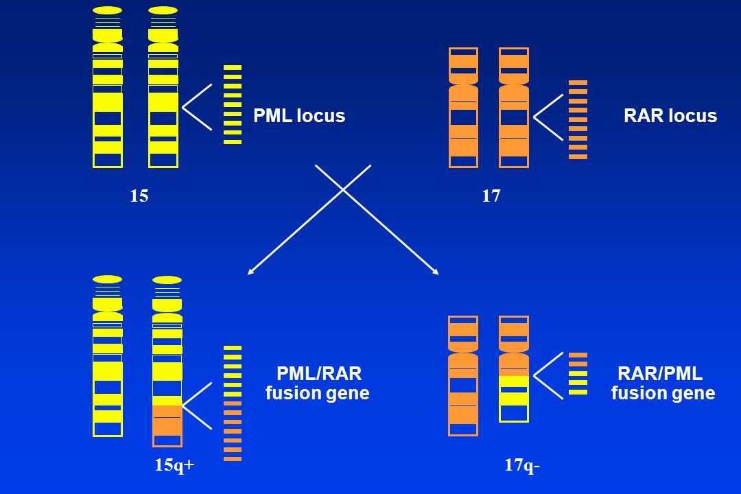PML locus RAR locus 15 17 PML/RAR fusion gene RAR/PML fusion gene 15q+ 17q-