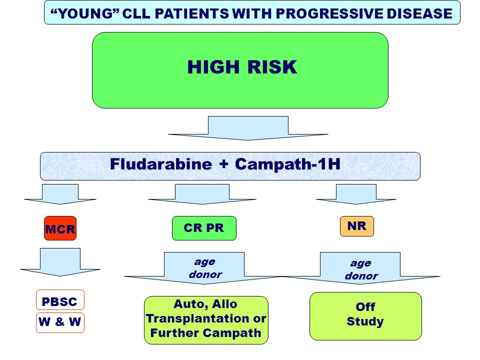 HIGH RISK YOUNG CLL PATIENTS WITH PROGRESSIVE DISEASE