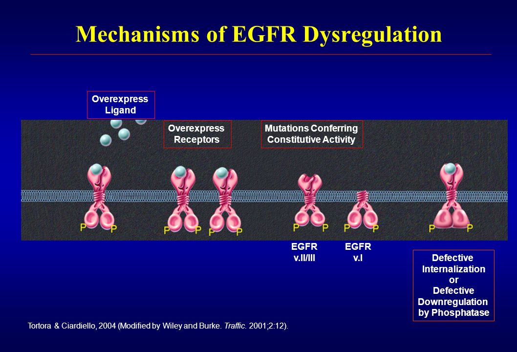 Mechanisms of EGFR Dysregulation