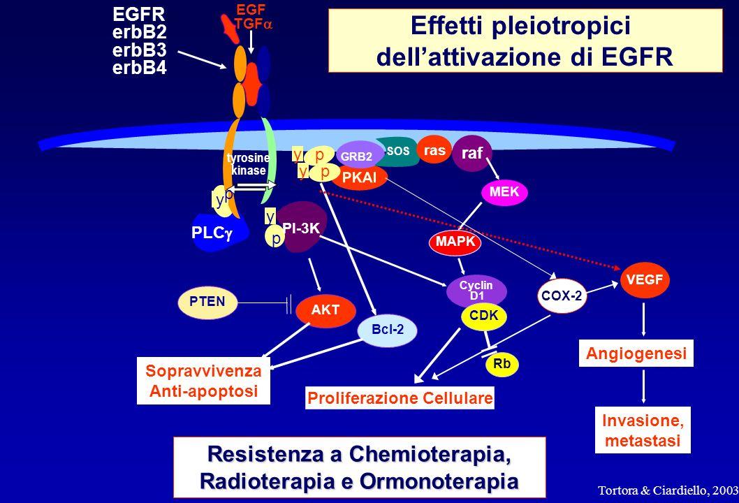 Effetti pleiotropici dell'attivazione di EGFR