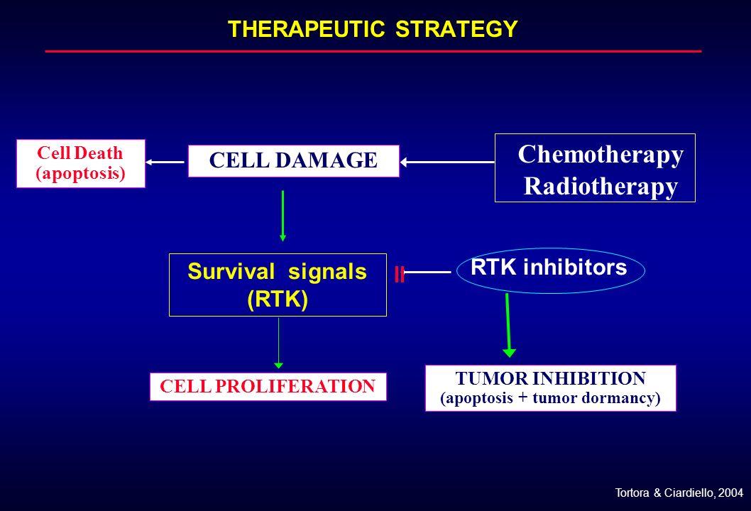 (apoptosis + tumor dormancy)