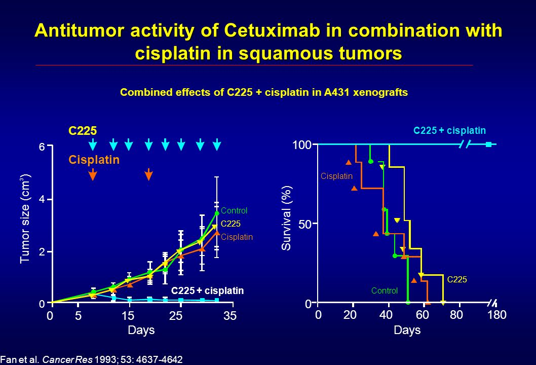Antitumor activity of Cetuximab in combination with cisplatin in squamous tumors
