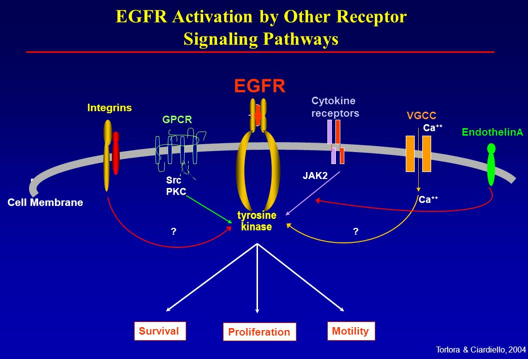 EGFR Activation by Other Receptor Signaling Pathways