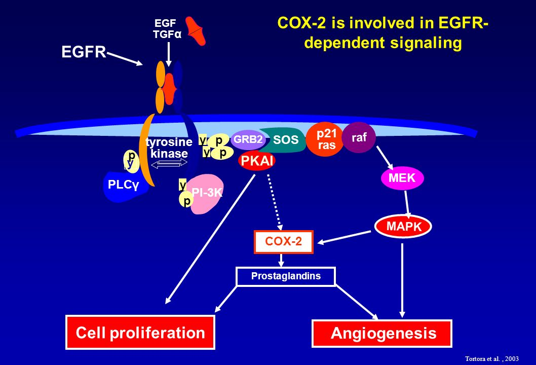 COX-2 is involved in EGFR-dependent signaling