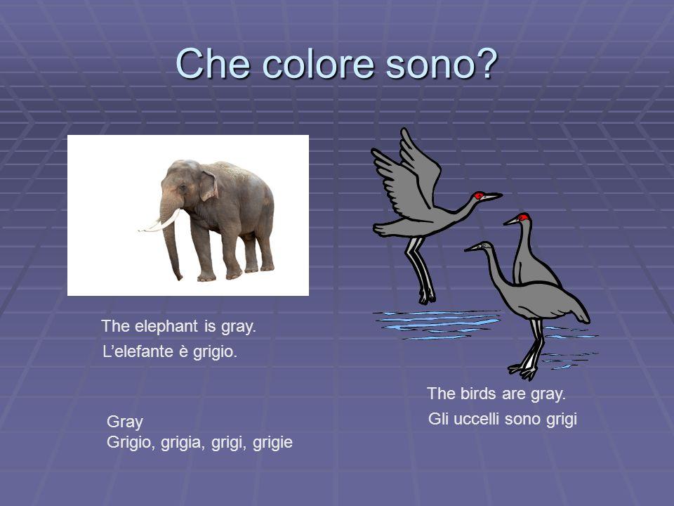 Che colore sono The elephant is gray. L'elefante è grigio.