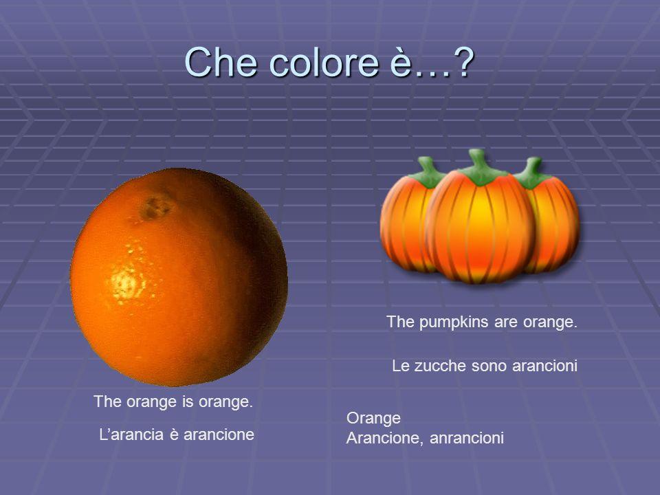 Che colore è… The pumpkins are orange. Le zucche sono arancioni