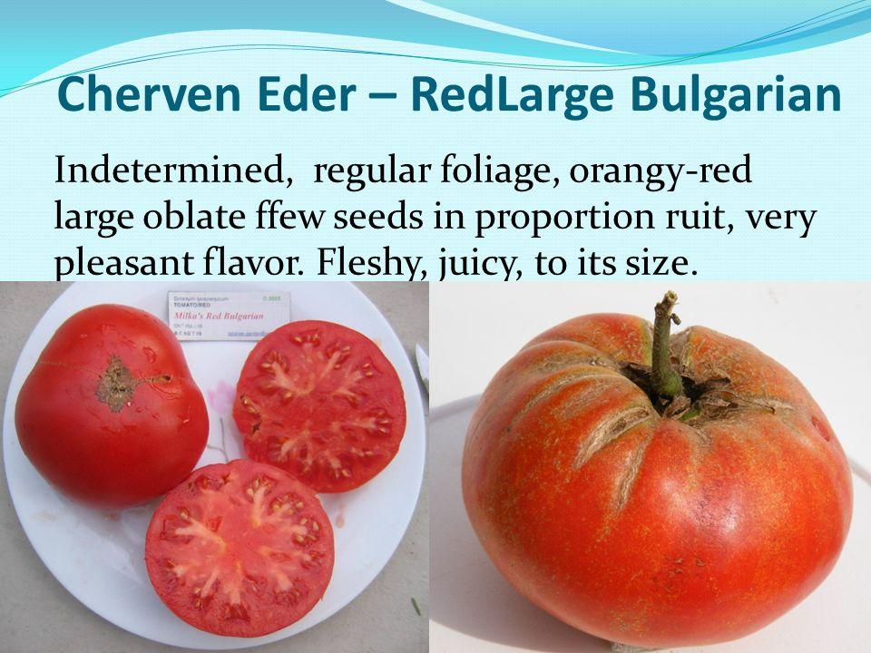 Cherven Eder – RedLarge Bulgarian