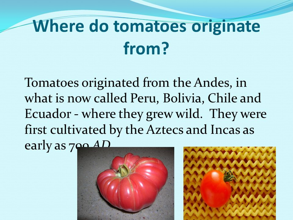 Where do tomatoes originate from