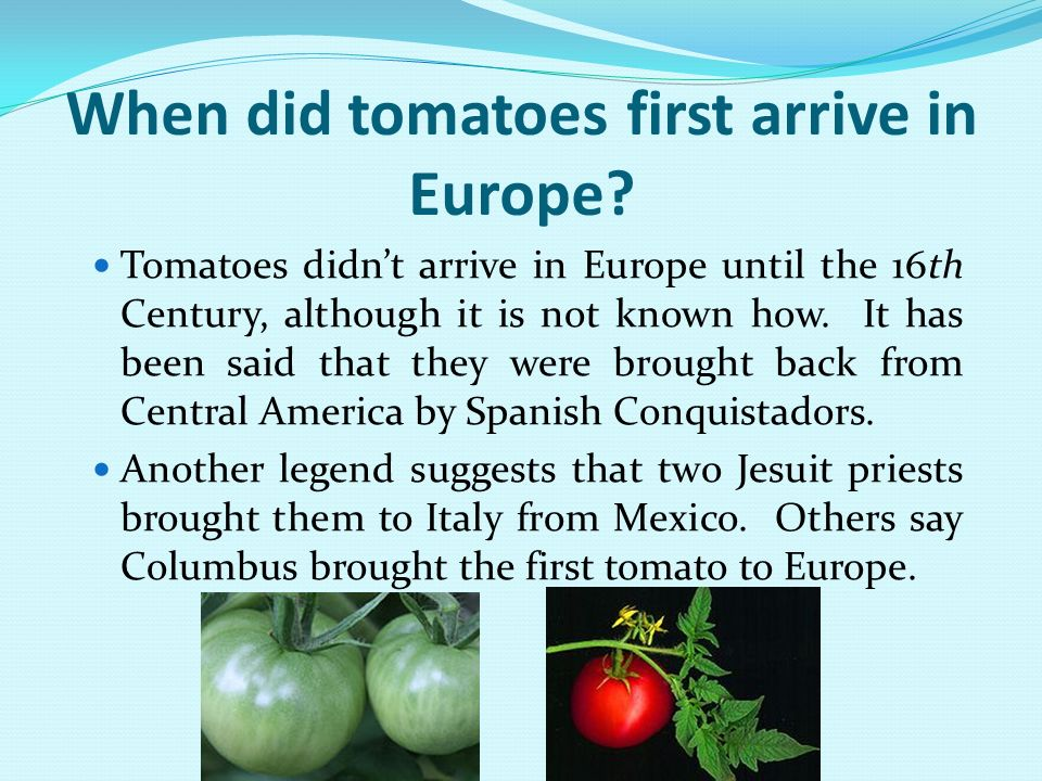 When did tomatoes first arrive in Europe