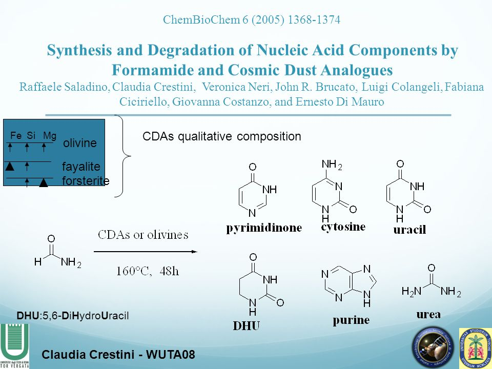 Synthesis and Degradation of Nucleic Acid Components by