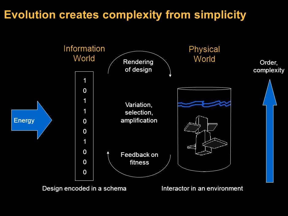 Evolution creates complexity from simplicity