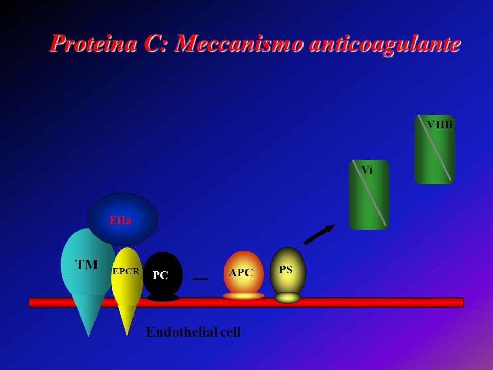 Proteina C: Meccanismo anticoagulante