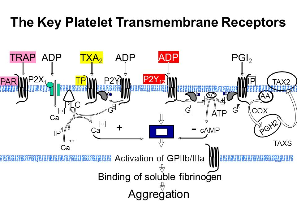 The Key Platelet Transmembrane Receptors