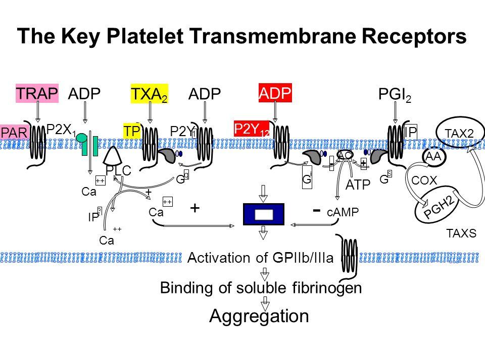 The Key Platelet Transmembrane Receptors