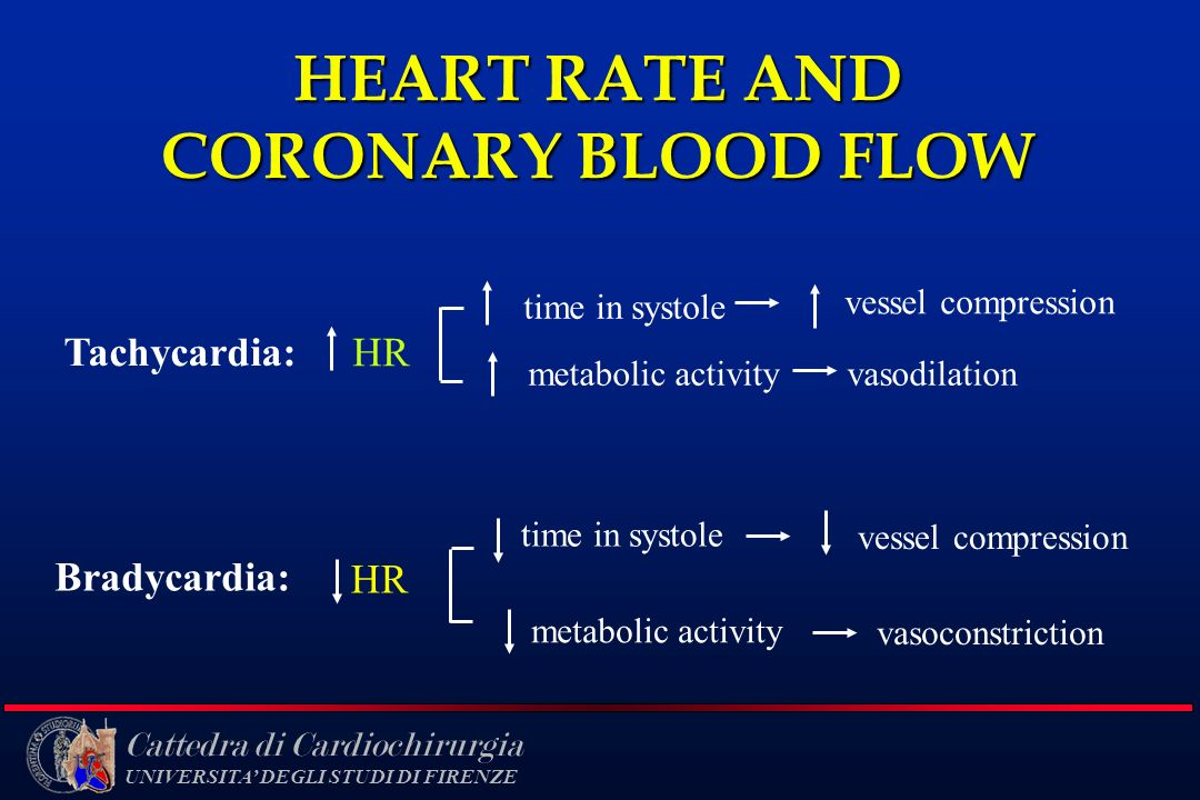 HEART RATE AND CORONARY BLOOD FLOW