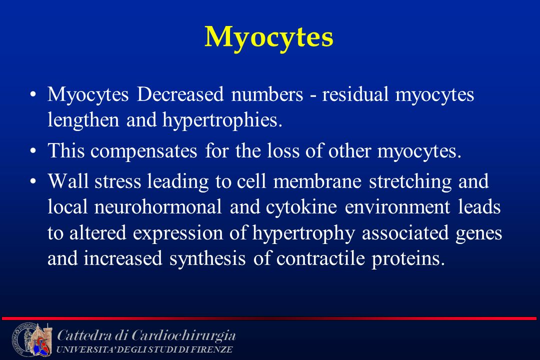 Myocytes Myocytes Decreased numbers - residual myocytes lengthen and hypertrophies. This compensates for the loss of other myocytes.