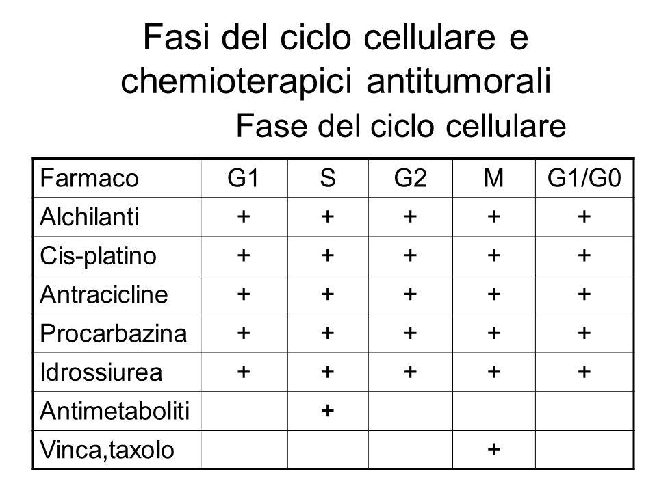 Fasi del ciclo cellulare e chemioterapici antitumorali