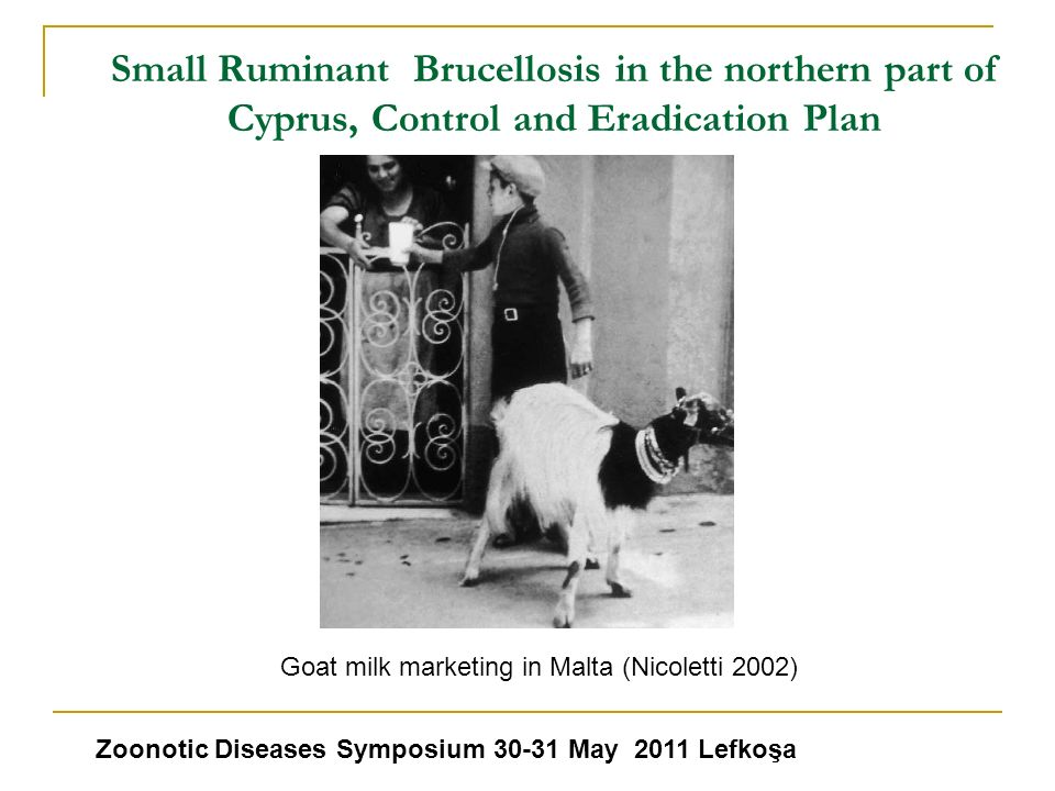 Small Ruminant Brucellosis in the northern part of Cyprus, Control and Eradication Plan