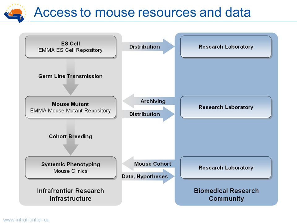 Access to mouse resources and data