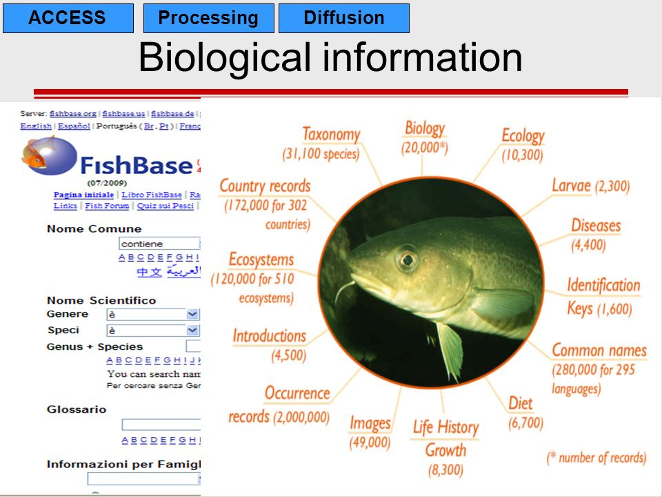Biological information