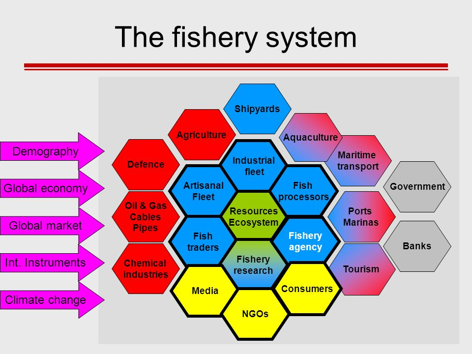 The fishery system Demography Global economy Global market