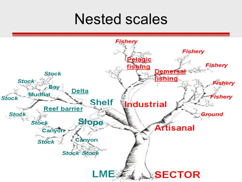 Nested scales
