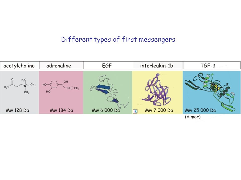 Different types of first messengers