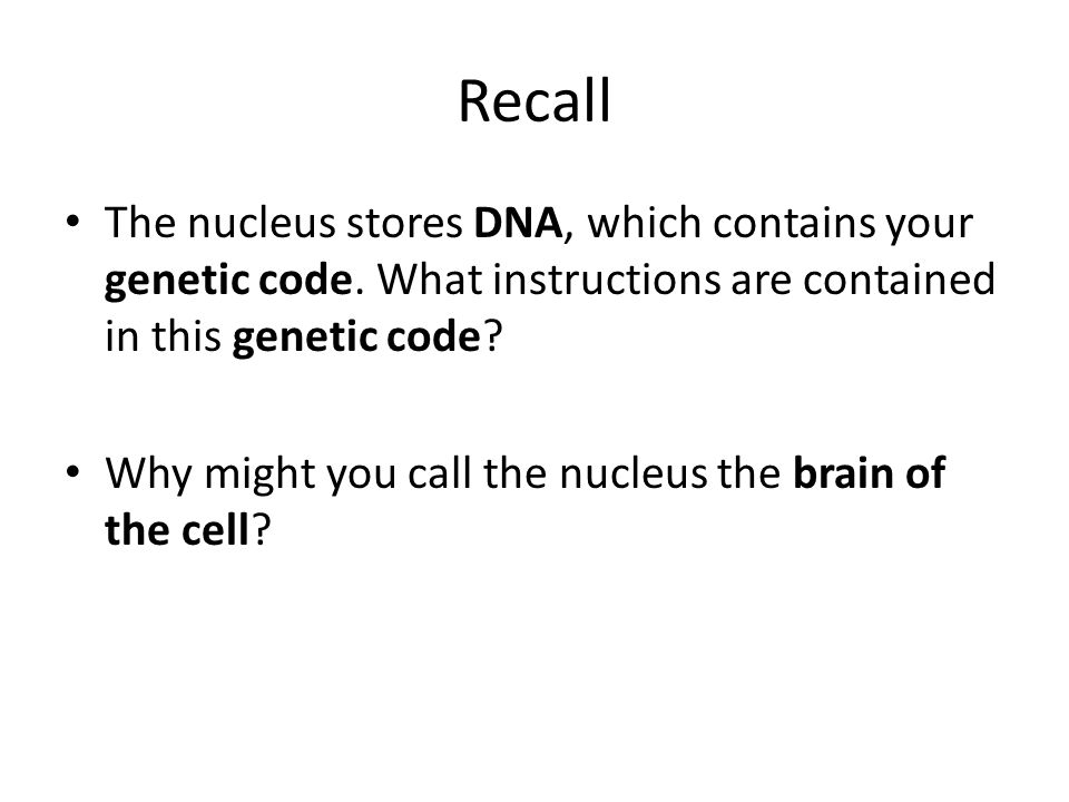 Recall The nucleus stores DNA, which contains your genetic code. What instructions are contained in this genetic code