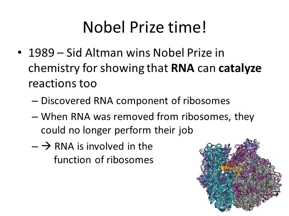 Nobel Prize time! 1989 – Sid Altman wins Nobel Prize in chemistry for showing that RNA can catalyze reactions too.