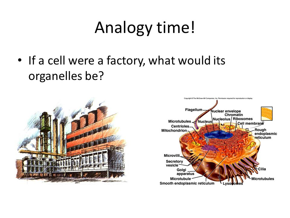 Analogy time! If a cell were a factory, what would its organelles be